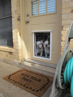 Dog Door Installation Services Dog Door Installers